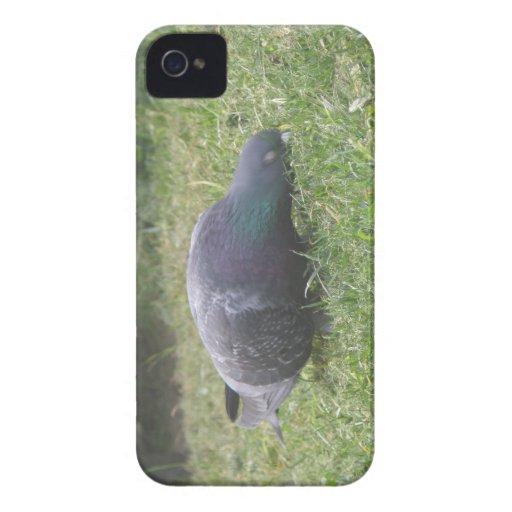Sleeping Pigeon Blackberry Bold Case