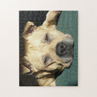 Sleeping Pit Bull Jigsaw Puzzle