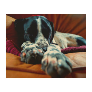 Sleeping Pointer Wood Canvas