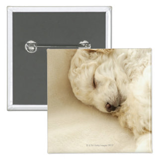 Sleeping Poodle puppy 15 Cm Square Badge