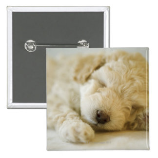 Sleeping Poodle puppy 2 Button