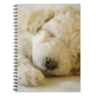 Sleeping Poodle puppy 2 Note Books
