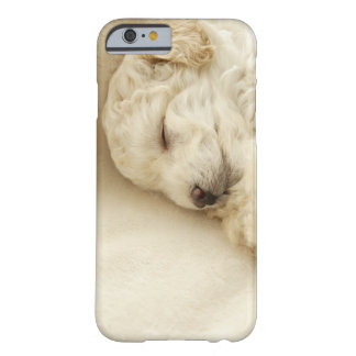 Sleeping Poodle puppy Barely There iPhone 6 Case