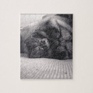 Sleeping Pug Jigsaw Puzzle