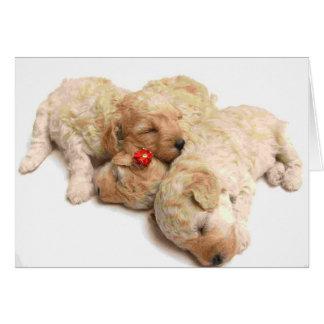 Sleeping Puppies Greeting Card