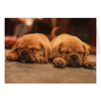 Sleeping puppies greeting card