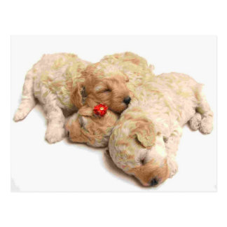 Sleeping Puppies Postcard