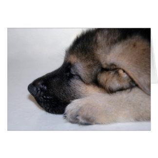 Sleeping Puppy Card