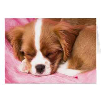 Sleeping Puppy Cavalier King Charles Spaniel Card