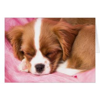 Sleeping Puppy Cavalier King Charles Spaniel Card