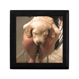 Sleeping Puppy Gift Box