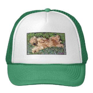 Sleeping Puppy Mesh Hats