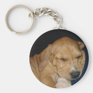 Sleeping puppy key chain
