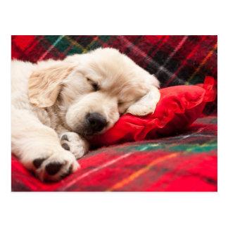Sleeping Puppy On Plaid Postcard