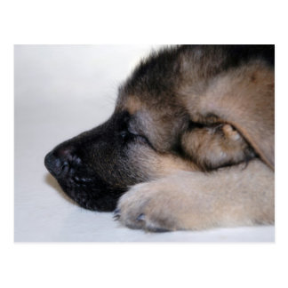 Sleeping Puppy Postcard