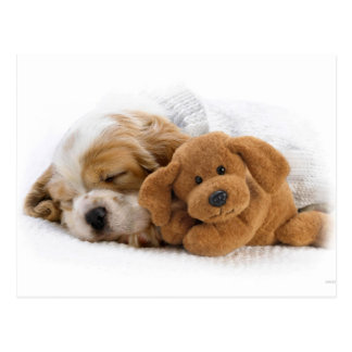 Sleeping Puppy Postcard