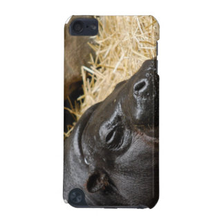Sleeping Pygmy Hippo  iPod Touch (5th Generation) Case
