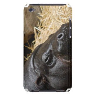 Sleeping Pygmy Hippo  iTouch Case iPod Touch Case-Mate Case