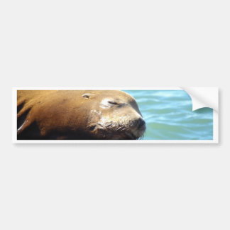 SLEEPING SEA LION BUMPER STICKER