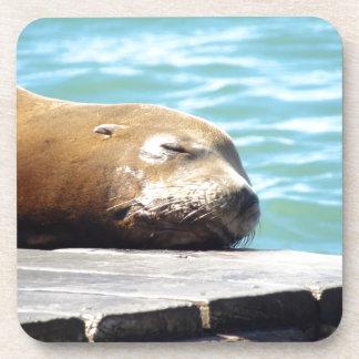 SLEEPING SEA LION DRINK COASTERS