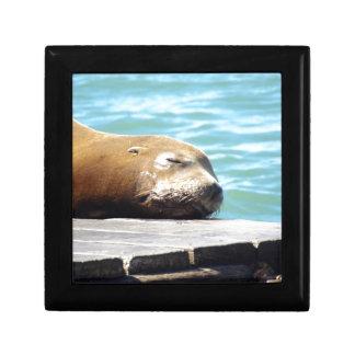 SLEEPING SEA LION GIFT BOX