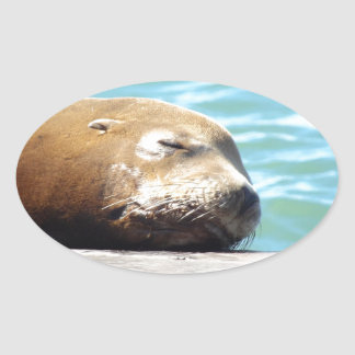 SLEEPING SEA LION OVAL STICKER