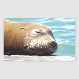 SLEEPING SEA LION RECTANGULAR STICKER