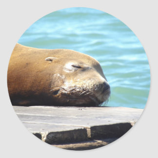SLEEPING SEA LION ROUND STICKER