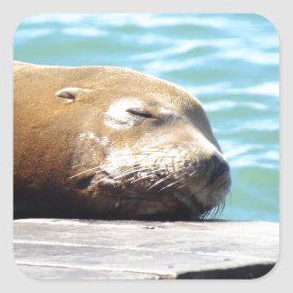 SLEEPING SEA LION SQUARE STICKER