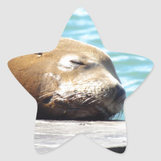 SLEEPING SEA LION STAR STICKER