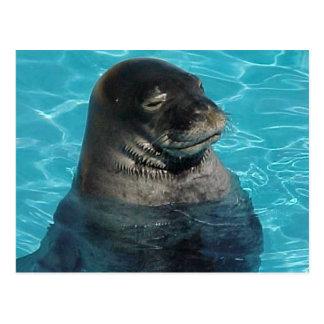 """""""SLEEPING SEAL"""" POSTCARD"""
