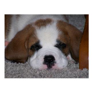 Sleeping St. Bernard Puppy Postcard