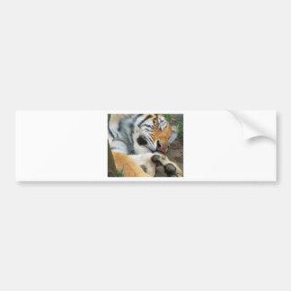 Sleeping Tiger Bumper Sticker