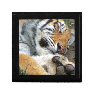 Sleeping Tiger Gift Box
