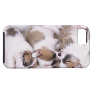 Sleeping welsh corgi puppies iPhone 5 covers