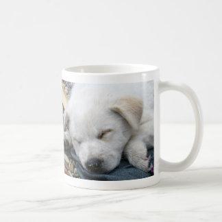 Sleeping white puppy coffee mugs