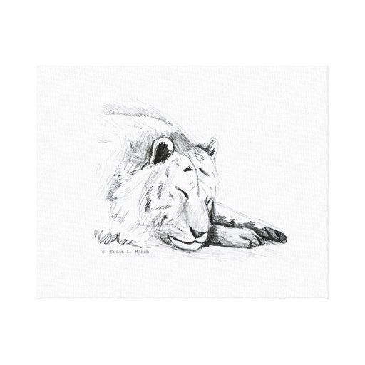 Sleeping White Tiger head and paws Pencil Drawing ...