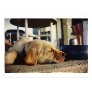Sleeping Yellow Labrador puppy postcard