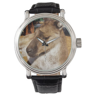 Sleepy Australian Kangaroo, Mens Leather Watch. Watch