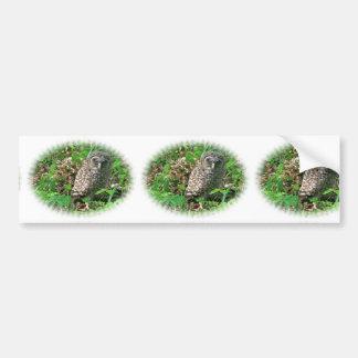 Sleepy Baby Barred Owl Bumper Sticker