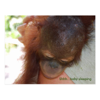 Sleepy Baby Orangutan in Daddy's Arms Postcard