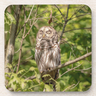 Sleepy Barred Owl Coaster