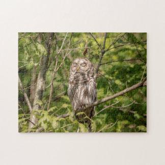 Sleepy Barred Owl Jigsaw Puzzle
