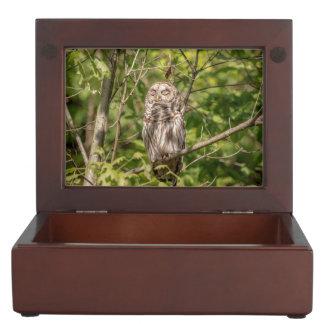 Sleepy Barred Owl Keepsake Box
