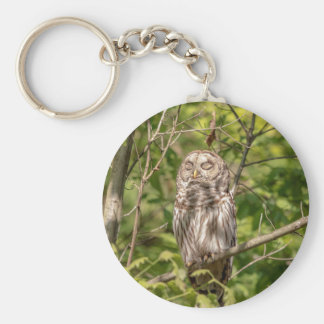 Sleepy Barred Owl Key Ring