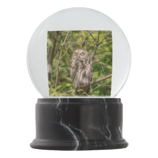 Sleepy Barred Owl Snow Globe