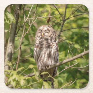 Sleepy Barred Owl Square Paper Coaster