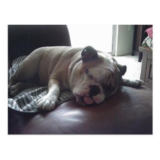 Sleepy bulldog postcard