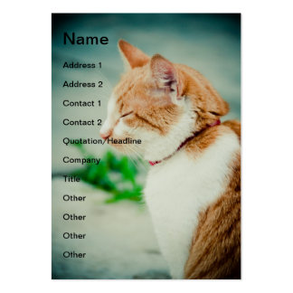 Sleepy cat business card