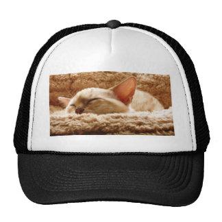 Sleepy Cat Trucker Hats